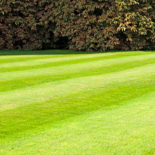 Lawn Fertilizer and Weed Control
